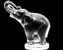 elefant-medium-medium